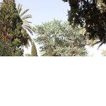 Golshan Garden of Tabas, Iran