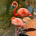 Foto de Sarasota Jungle Gardens