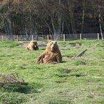Waving bears