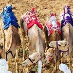 صورة فوتوغرافية لـ دبي لسباق الجمال راسينغ كلوب