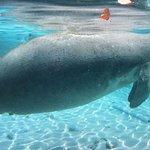 Billede af Bird's Underwater