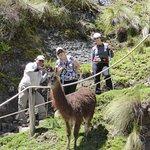 Alpaca's and llamas are eveywhere.