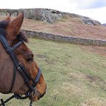Horse riding Northumberland