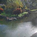 koi pond on garden area