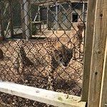 Colchester Zoo – fénykép