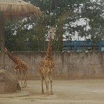 Foto de La Aurora Zoo