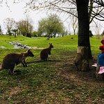 Photo of Le Jardin des Kangourous