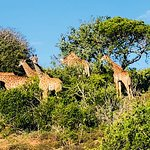 Photo of Schotia Safaris Private Game Reserve