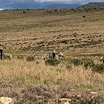 Photo of Mountain Zebra National Park