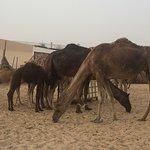 Photo of Desert Rose Tourism - Day Tours