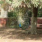 صورة فوتوغرافية لـ حديقة الحيوان بالجيزة
