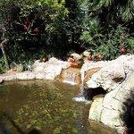 صورة فوتوغرافية لـ Monte casino bird park