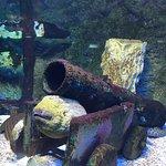 Photo of Underwater World