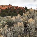 Dixie National Forestの写真