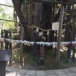 御神木の大銀杏と十二支めぐりのブロンズ像