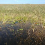 Sawgrass and cattails as far as you can see. Gators as well.