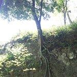 崖に立つ樹木