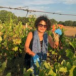 An authentic grape-harvesting experience in Southern Puglia
