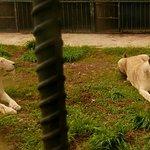 ภาพถ่ายของ สวนสัตว์ โบนันซ่าเอ็กโซติก ซู