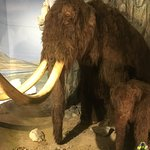 Wooly mammoth and Calf actually a bit scary