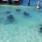 Foto de Aqua Adventures Eco Divers
