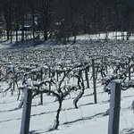 Фотография Finger Lakes Wine Country