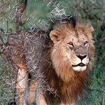 Φωτογραφία: Cheeky Monkey Safaris - Day Tours