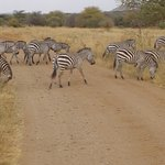 Cheeky Monkey Safaris - Day Tours Foto