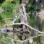 Alligator chilling out in the lake....