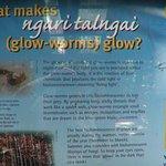 About glowworms