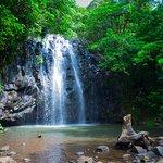 Atherton Tablelands Waterfall Circuit