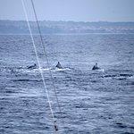 Foto de Crucero Bahía Alegre