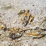 More fish and bird skeletons on the beach