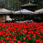 Rest places near to the tulip fields