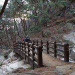 Bridge across the stream