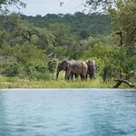 The view of our waterhole from the pool.