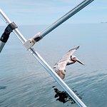 Foto de Sea Kayak Adventures, Inc.