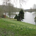 Daffodils by the lake.