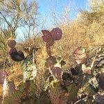Cerro El Bachoco صورة فوتوغرافية