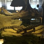 Baby Gator's in building exhibit