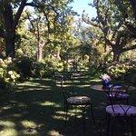 Billede af Tea under the Trees