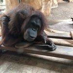 Photo of Zoo de la Palmyre