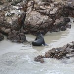 surprise seals