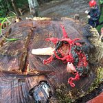 """A lovely introduction to the """"Devil's stink horn"""" mushroom!"""