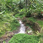 Foto de Pura Vida Gardens and Waterfalls