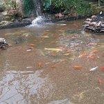 Photo of Roath Park