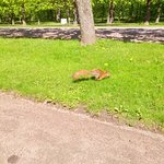i piccoli abitanti di Peterhof