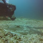 Diver with shovel ray