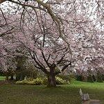 Beautiful Park During Cherry Blossom Season