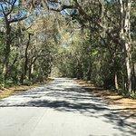 Beautiful tree lined road